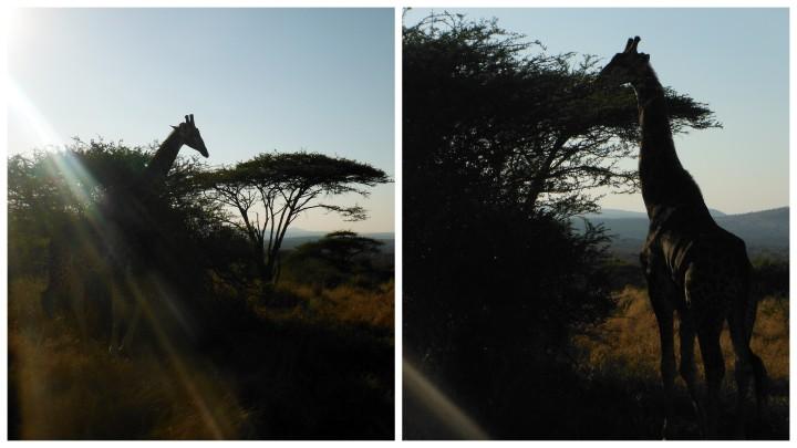 5 Safari