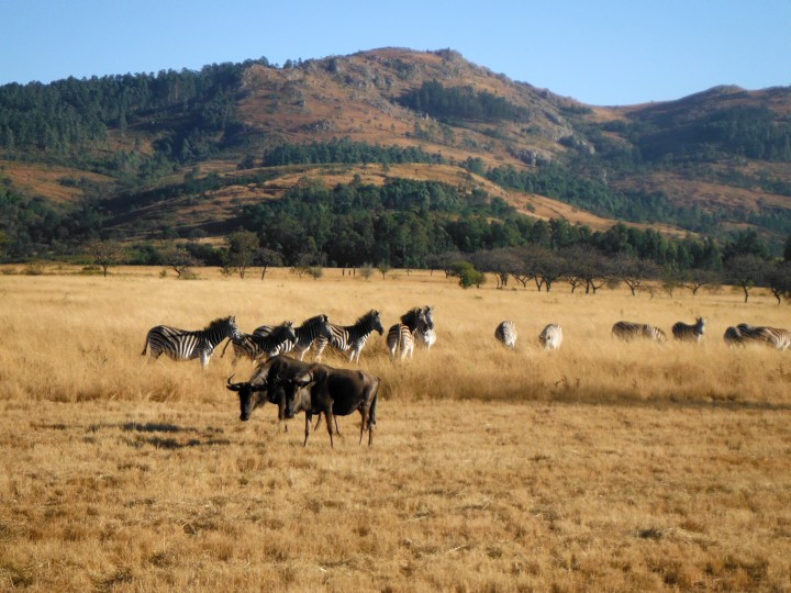 South Africa & Swaziland, 2014 – AnIntro