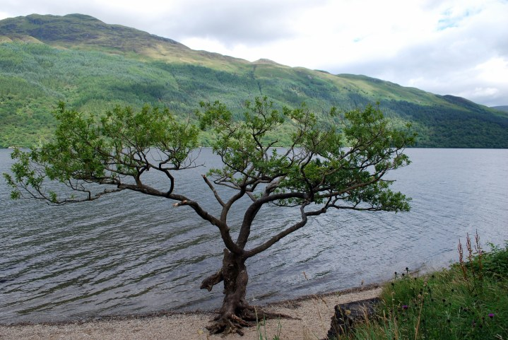 Loch Lomond, 2016: Peace and Beauty