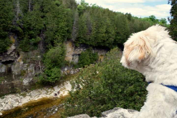 Elora Gorge – A ScenicHike